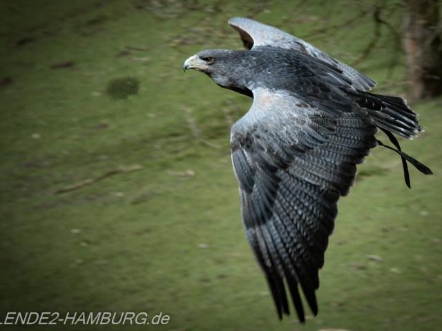 Blende2-Hamburg Tierfotografie (2 von 1)-2