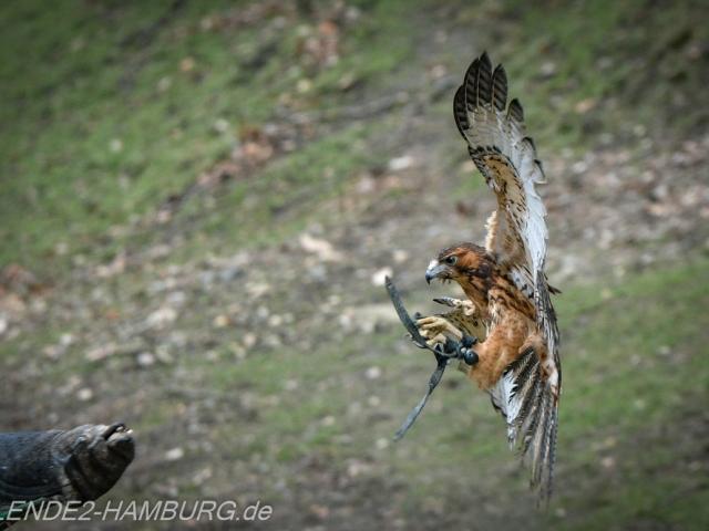 Blende2-Hamburg Tierfotografie (2 von 1)-3