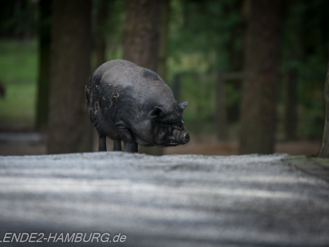 Blende2-Hamburg Tierfotografie (2 von 1)-5