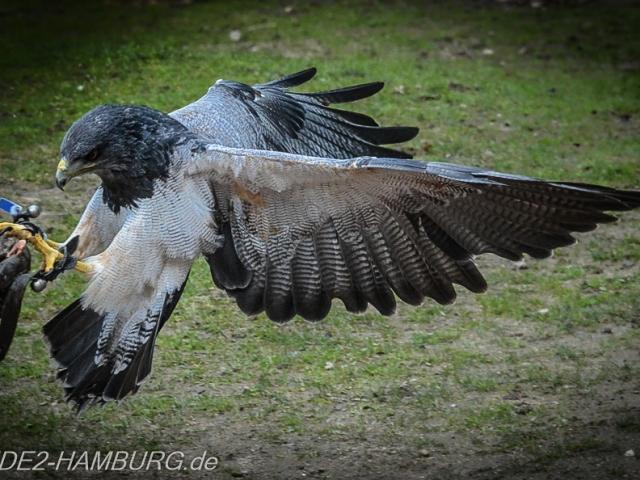 Blende2-Hamburg Tierfotografie (2 von 1)