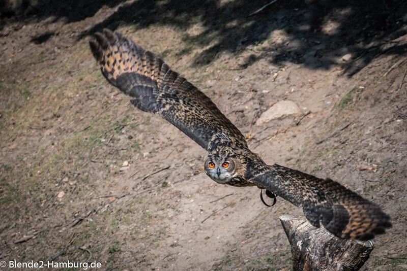 Fotokurs Tierfotografie